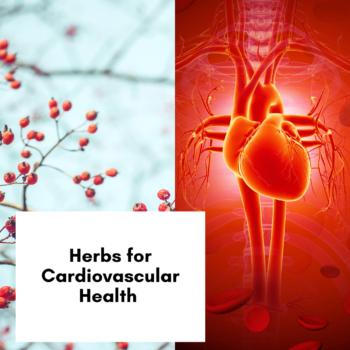 Herbs for Cardiovascular Health
